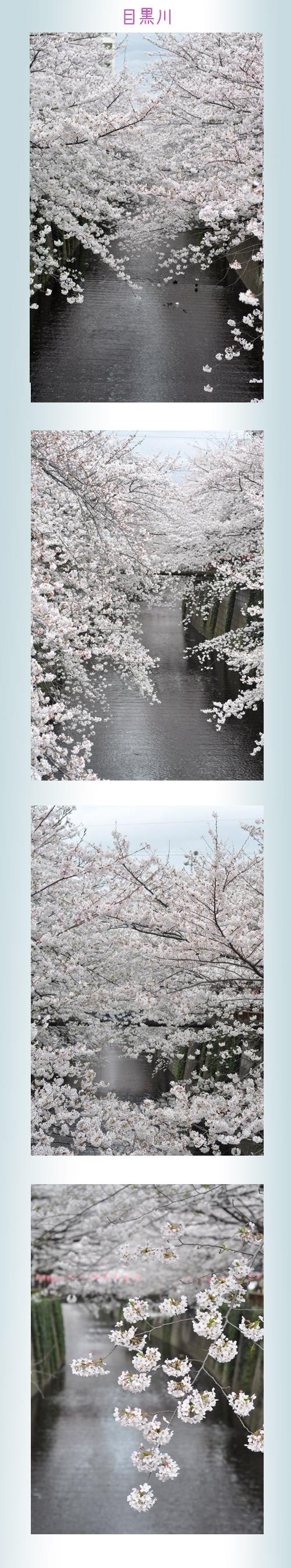 4月2日目黒川1
