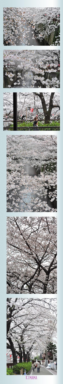 4月2日目黒川2