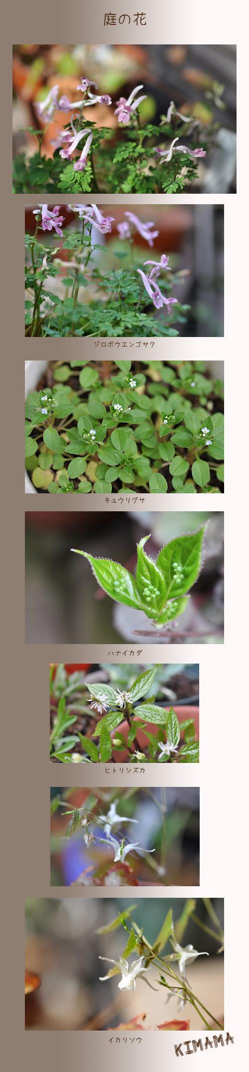 4月6日庭の花1