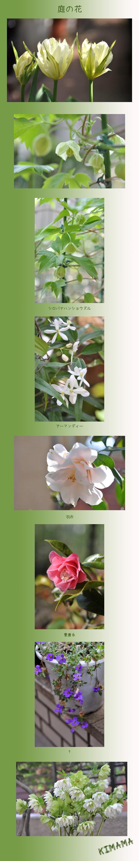 4月6日庭の花2