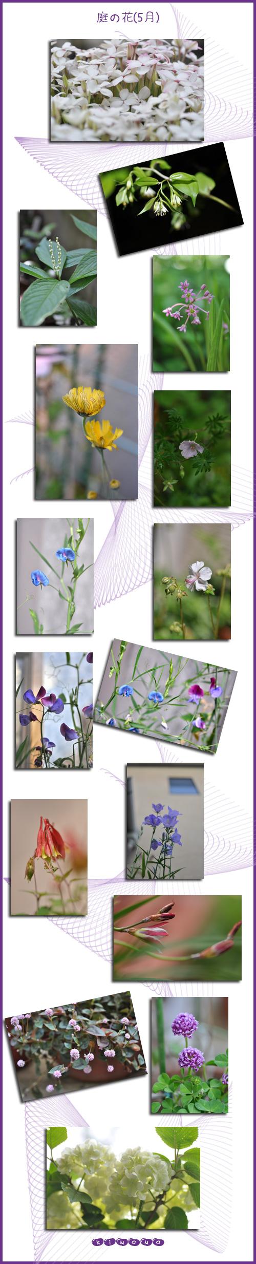 5月20日庭の花