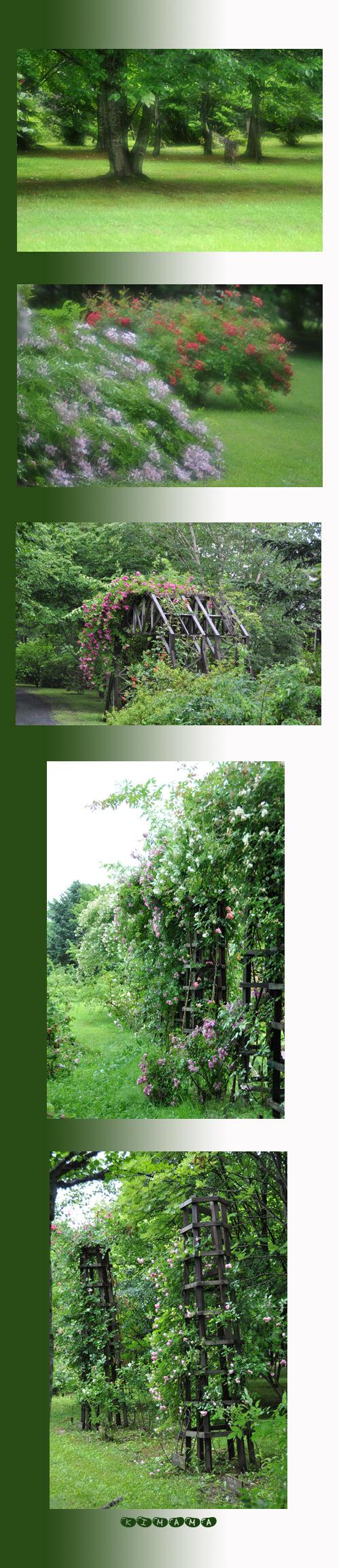 7月11日秘密の花園