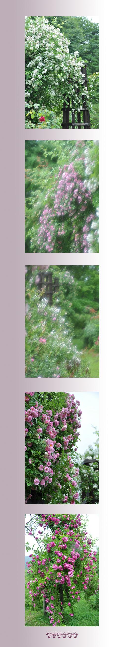 7月13日秘密の花園3