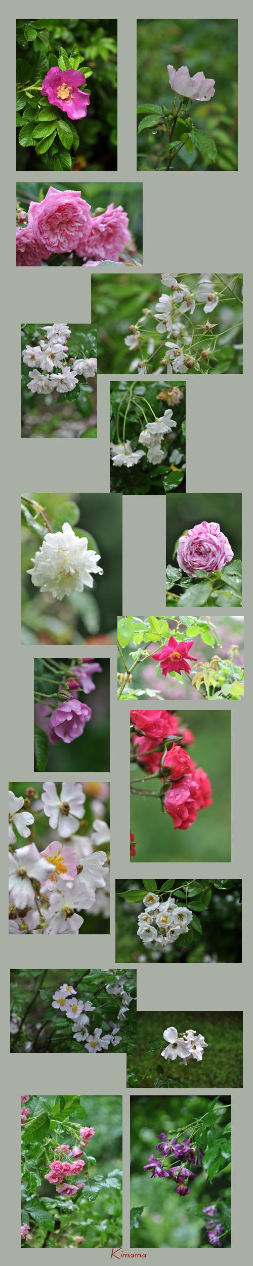 7月14日秘密の花園2