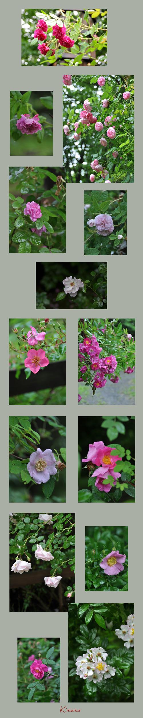7月14日秘密の花園3