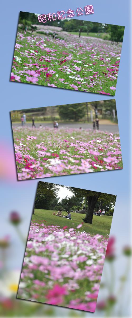 10月15日昭和記念公園1