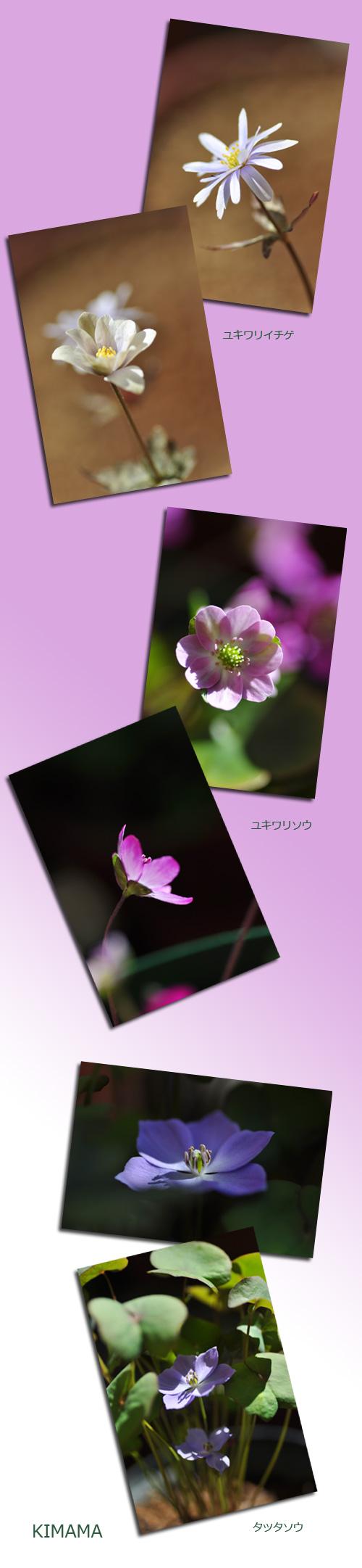 4月3日山野草1