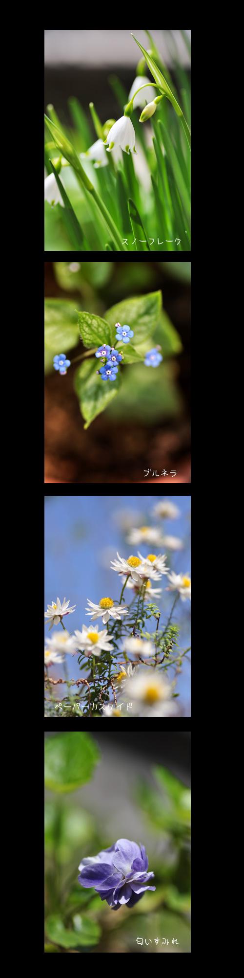 4月22日庭の花1