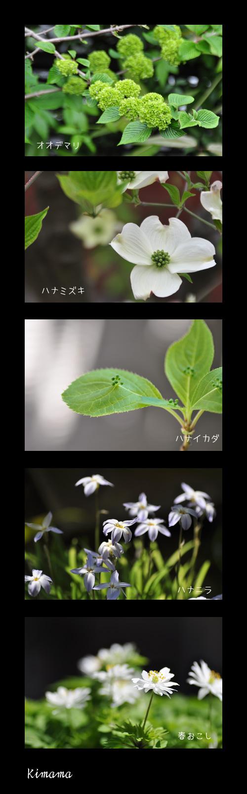 4月22日庭の花2