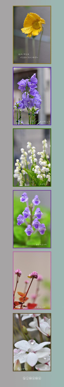 5月14日庭の花