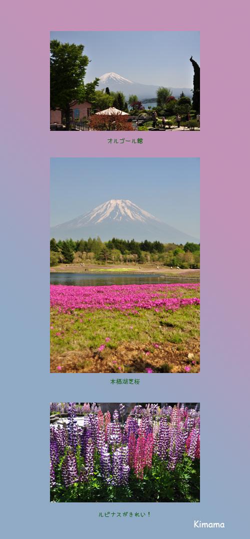 5月19日芝桜