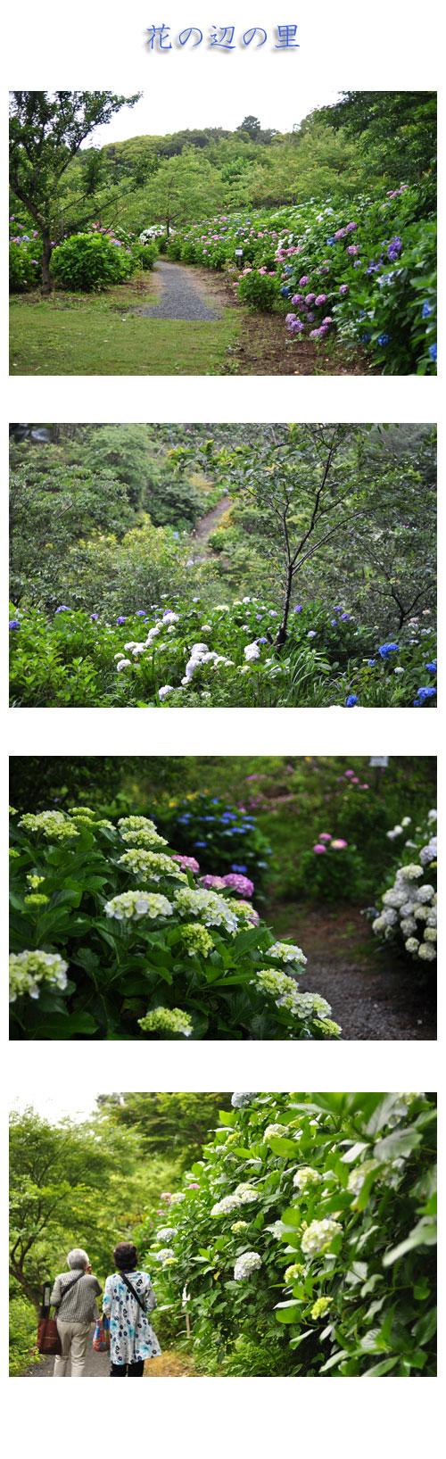 6月23日花の辺の里1