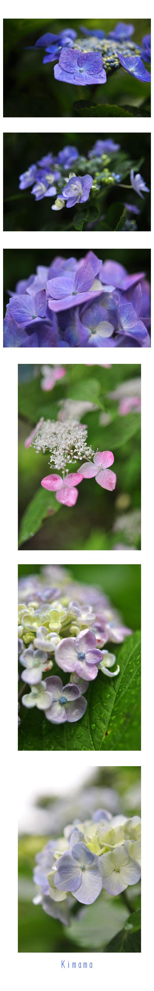 6月23日花の辺の里2