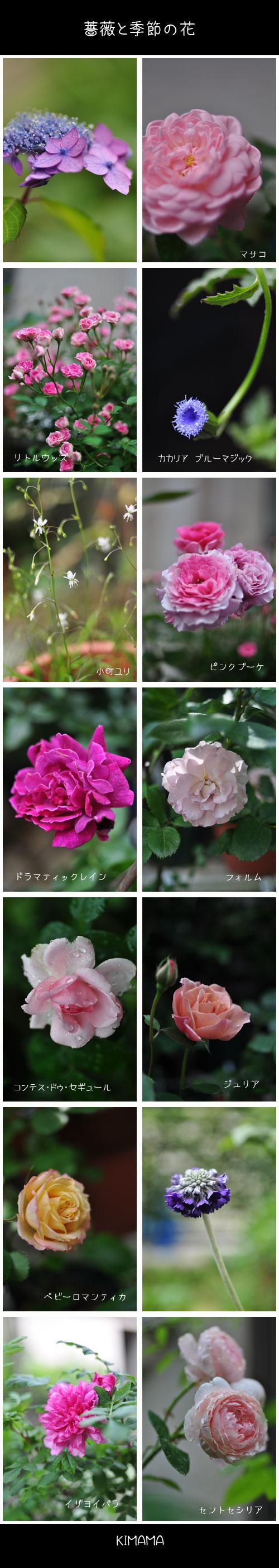 6月24日薔薇と季節の花