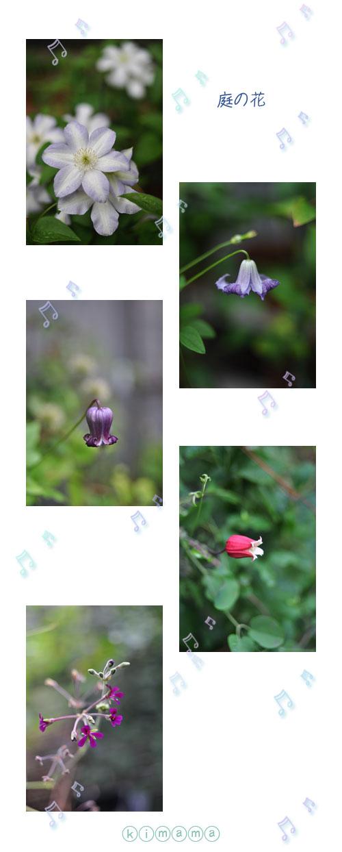 7月19日庭の花