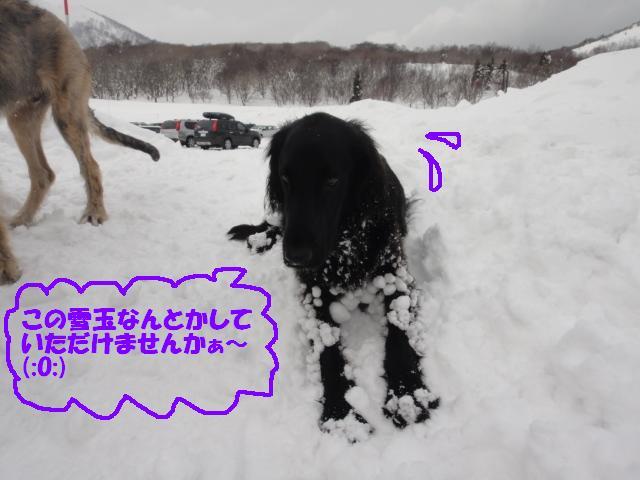 雪玉ききこ