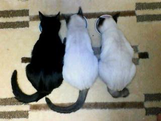 後ろ姿 3匹