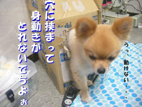 SA080816a_convert_20080817223830.jpg