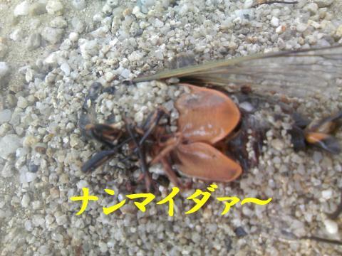 Snakigara_convert_20080815233214.jpg