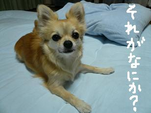 P1000835-deji.jpg