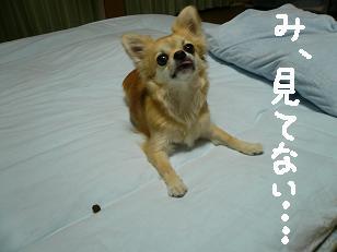 P1000841-deji.jpg