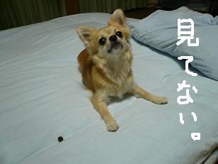 P1000842-deji.jpg