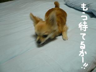 P1000846-deji.jpg