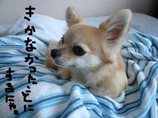 P1010140-deji.jpg