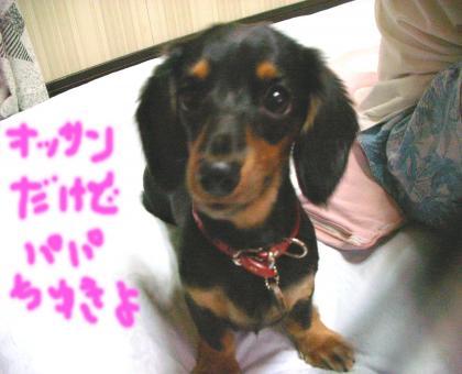 tyuki_convert_20080905165731.jpg