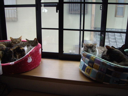 猫団子全体