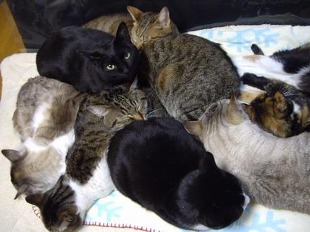 8猫団子1