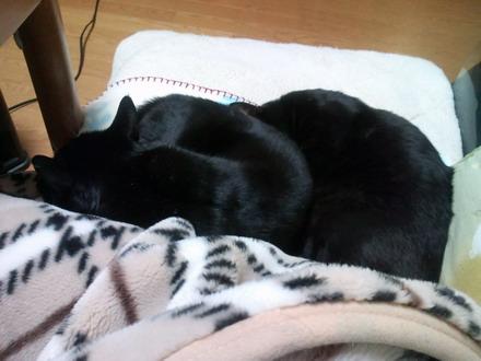 黒猫2匹?