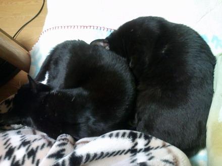 黒猫2匹?1