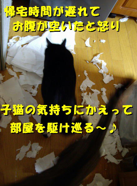 暴れても好きな猫6