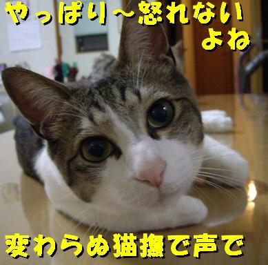暴れても好きな猫3
