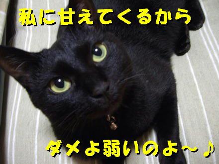 暴れても好きな猫4
