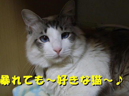 暴れても好きな猫5