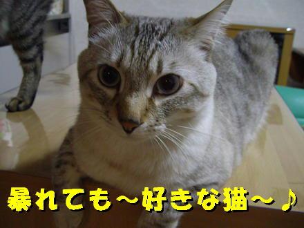 暴れても好きな猫2