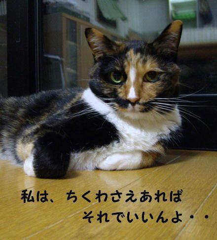 もみちゃん4