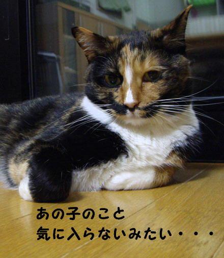 もみちゃん2
