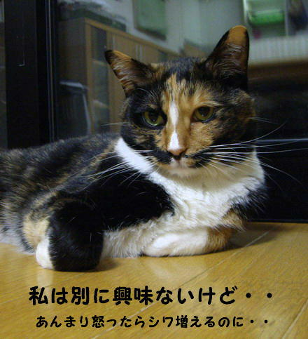 もみちゃん3