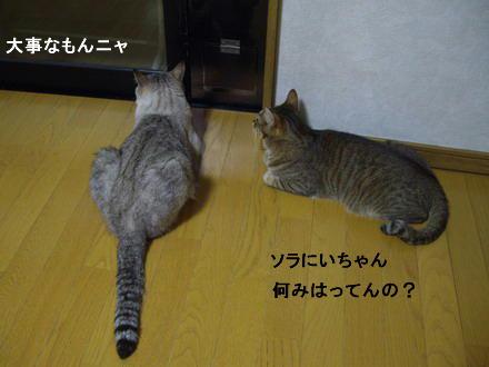 待ち伏せ隊1