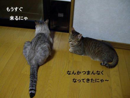 待ち伏せ隊2
