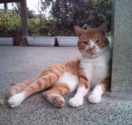 お地蔵様の猫