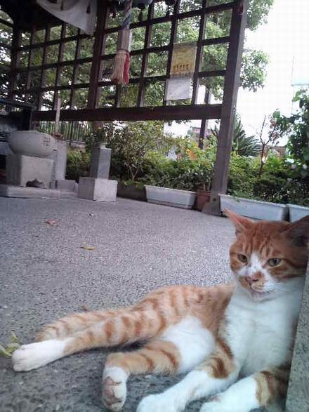 お地蔵様の猫2