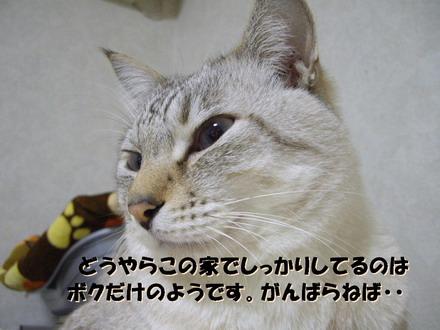 IMGP2632.jpg