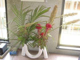 4階のお花