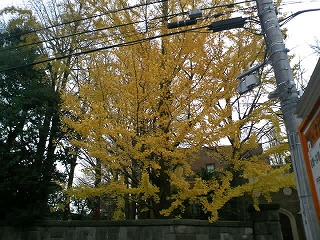 目白駅頭が終わって、徳川さんの銀杏を画像に、季節は移っています