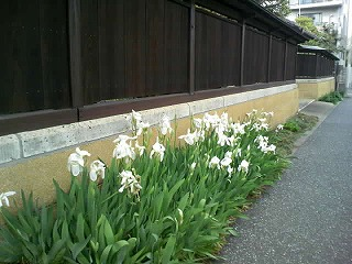 古い壁にお花-滝野川絶景
