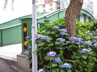 柳橋2-両国橋からすぐのところ、剣道修行時代、浅草の島田道場に通った橋
